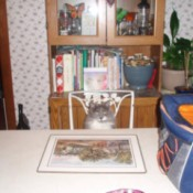 Kitty sitting at table.