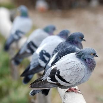 Removing Bird Poop Stains Thriftyfun