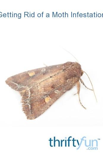 Getting Rid Of A Moth Infestation Thriftyfun