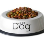 dog food dish