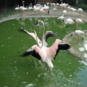 Sylvan Heights Waterfowl Park (NC)
