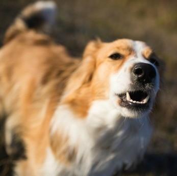 Dog Training Aggression Towards Strangers