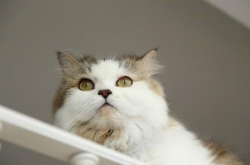 Cat peeing indoors problem