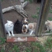 Cats in outside pen.