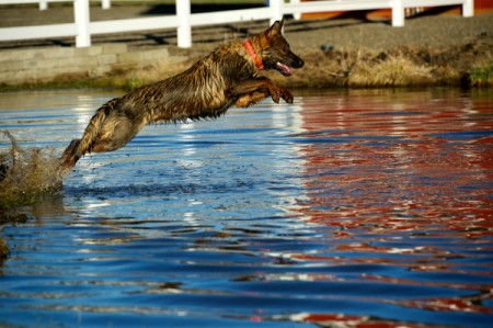 Leaping into the water.