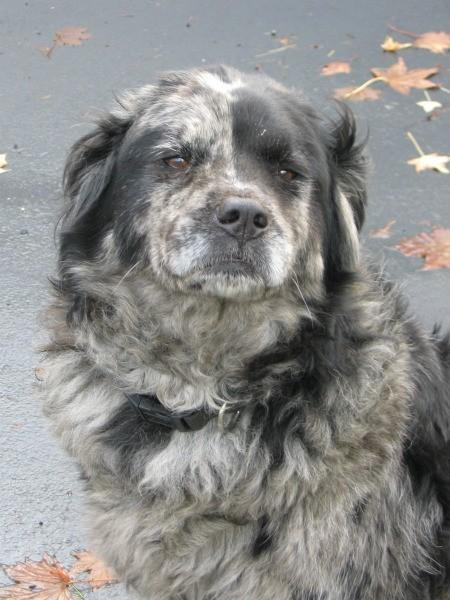 Closeup of dog.