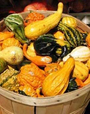 Gourd harvest in a basket.