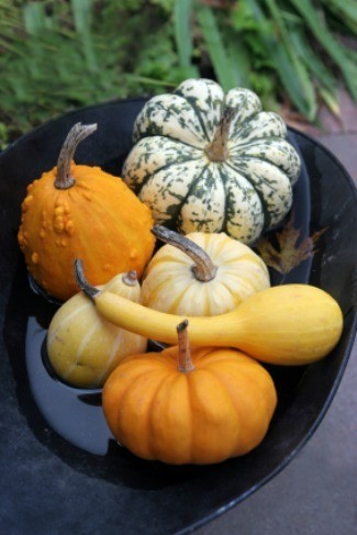 Gourds die before mature
