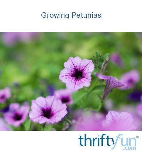 Growing Petunias Thriftyfun