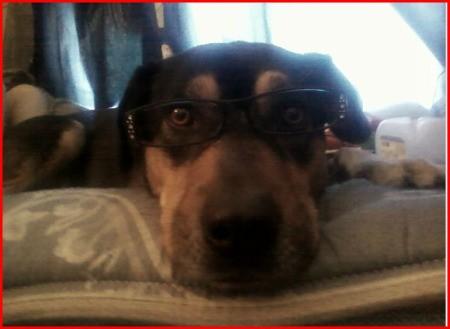 Bruno (Catahoula Rottweiler)