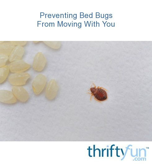 Preventing bed bugs from moving with you thriftyfun for How do i prevent bed bugs