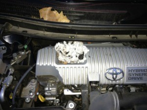 Rodent nest in a car's engine compartment.