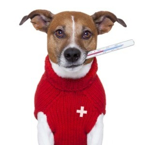 How to Tell If Your Pet is Sick