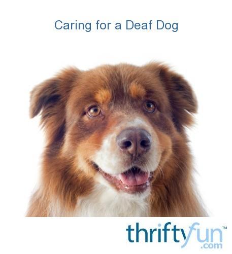 Caring For A Deaf Dog Thriftyfun