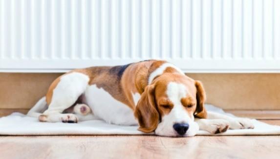Dog Afraid Of Laminate Floor Thriftyfun