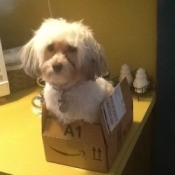 Dog in box.