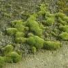 moss on a driveway