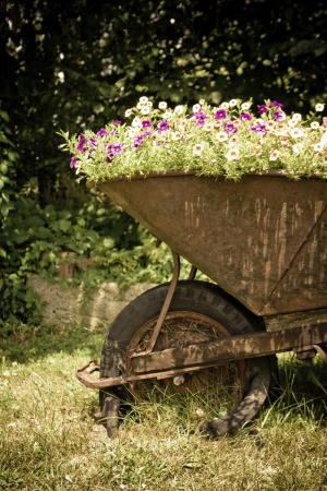 A old wheelbarrow used as a planter.