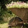A old wheelbarrow used as a planter.