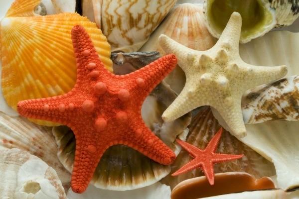 cleaning seashells