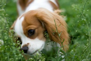 dog eating plants