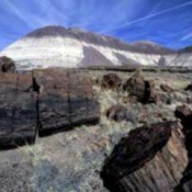 Petrified Forest (Near Flagstaff, AZ)