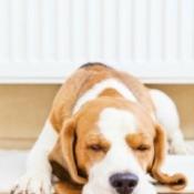 Laminate Flooring and Pets