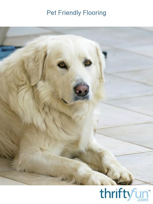 Pet Friendly Decorating Flor Carpet Tiles: Pet Friendly Flooring