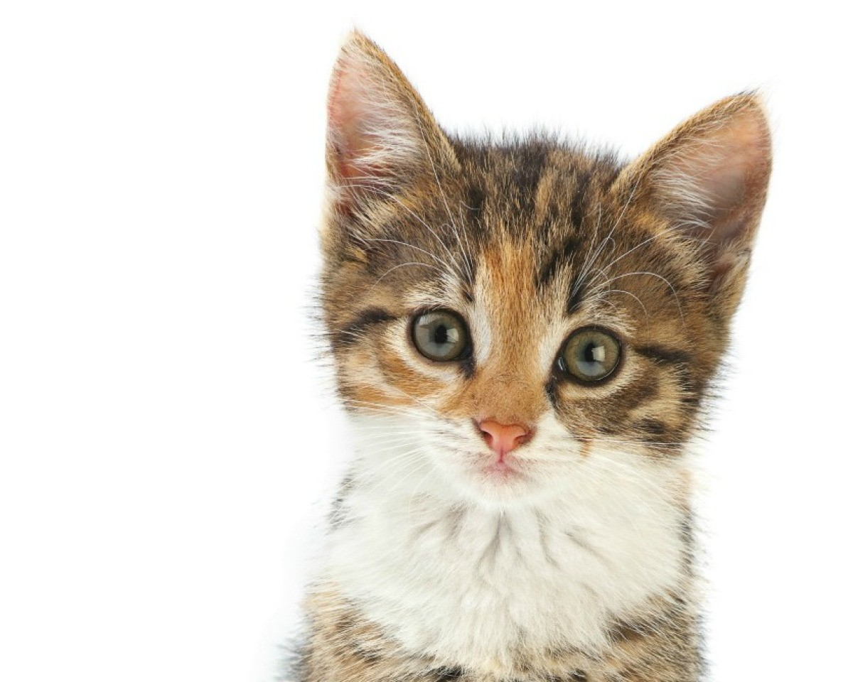 c067f33dc ... at home whereas others need to be referred to a vet to determine the  cause and proper treatment. This is a guide about treating a kitten with eye  ...