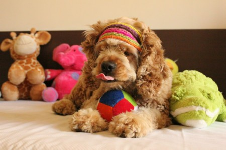 Coco with toys.