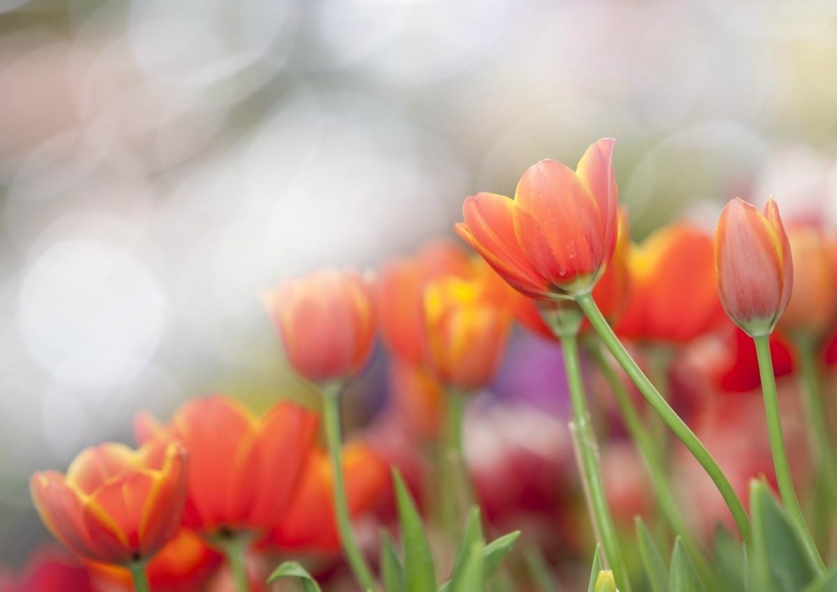 Good Plants For Morning Sun Thriftyfun