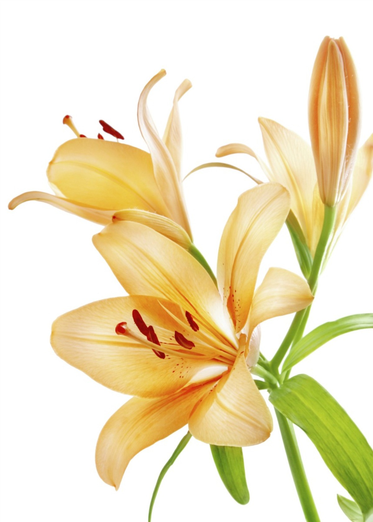 Growing Lilies In Pots Thriftyfun