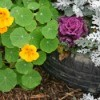 Tire planter with flowers in it.