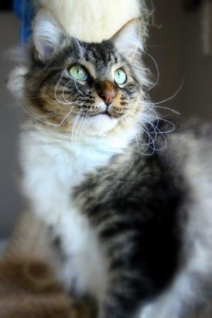 Cat looking up.