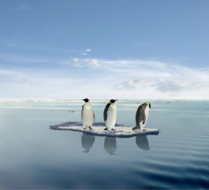 Penguins on Ice Block