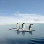 Penguins on Ice Block