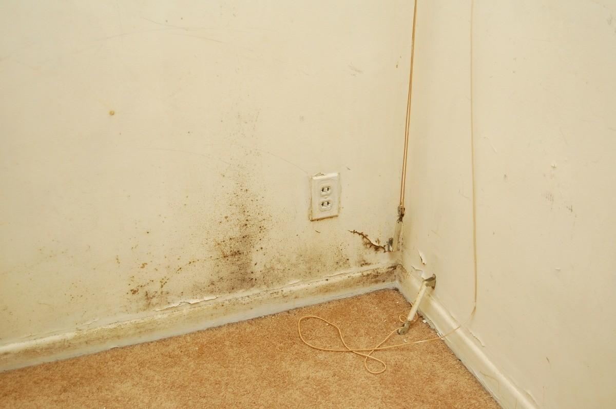Mold And Mildew In Corner