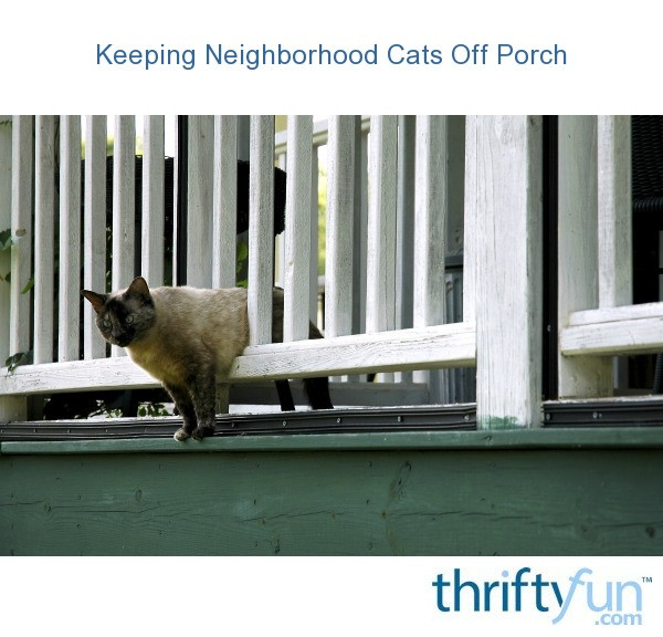 How To Keep Cats Off Patio Furniture.Keeping Neighborhood Cats Off Porch Thriftyfun