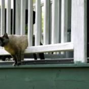 Neighborhood Cat On Porch