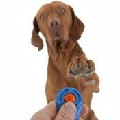 Basic Dog Training With Clicker