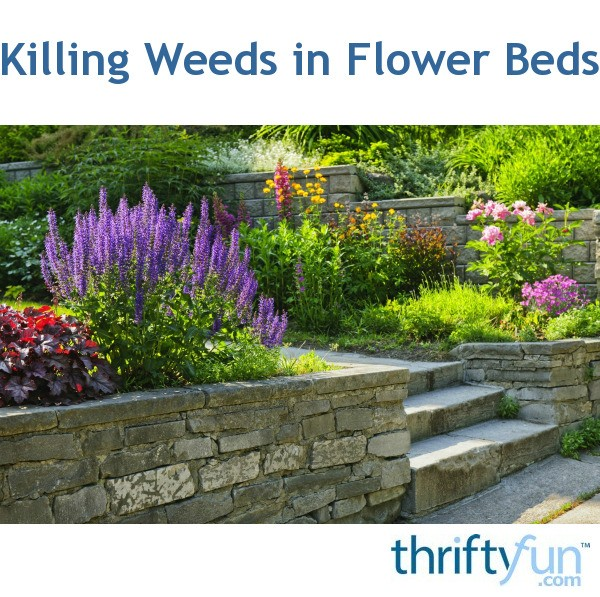Killing Weeds In Flower Beds Thriftyfun