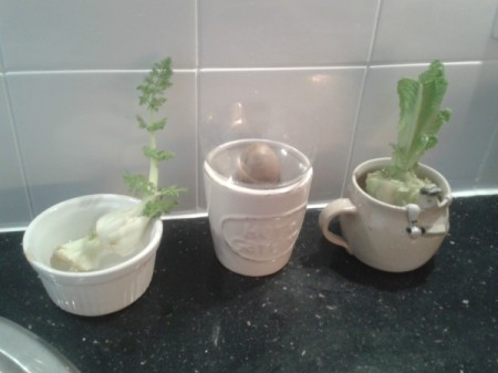 Magically Growing Foods from Waste