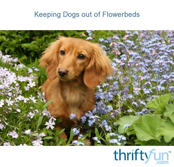 Keeping Dogs Out Of Flowerbeds Thriftyfun