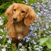 dog in flowerbed