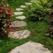 Ground Cover Between Stones
