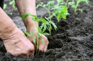planting in spring