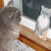 Double Trouble with Fuzzy (Cat)