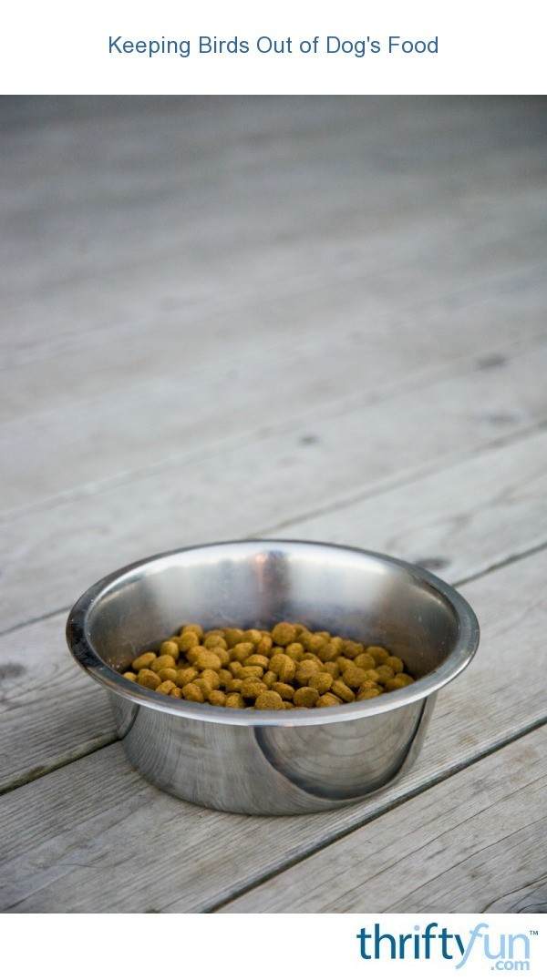 Keeping Birds Out Of Dog S Food