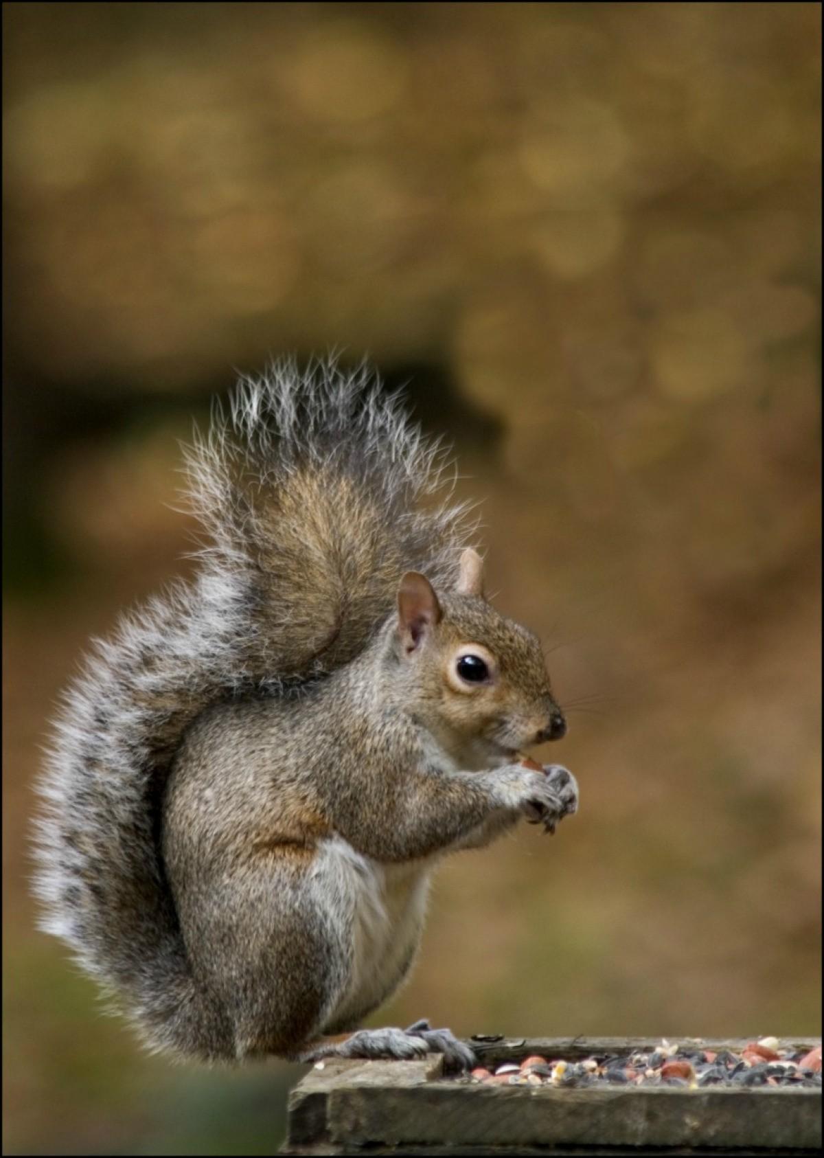 Squirrels Chewing on Car Wiring | ThriftyFun on