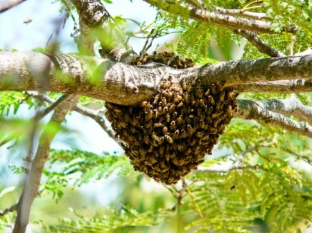 Bee Hive Photos